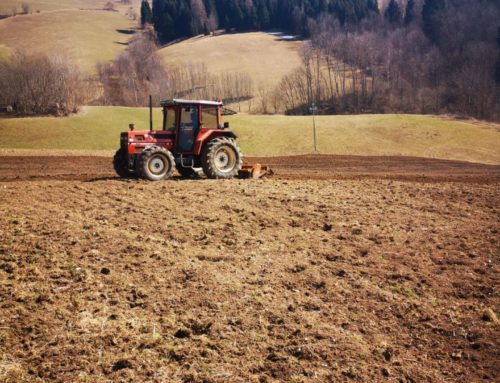 La Semina dell'originale Patata di Treschè Conca – Stagione 2019
